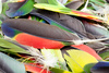 parrot feathers - photo/picture definition - parrot feathers word and phrase image