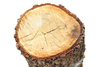 wooden stump - photo/picture definition - wooden stump word and phrase image
