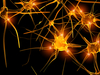 neurons - photo/picture definition - neurons word and phrase image