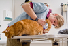 veterinarian doctor - photo/picture definition - veterinarian doctor word and phrase image