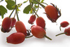 dog rose hips - photo/picture definition - dog rose hips word and phrase image