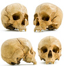 skull - photo/picture definition - skull word and phrase image