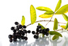 black berries - photo/picture definition - black berries word and phrase image