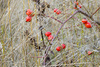 dogrose branch - photo/picture definition - dogrose branch word and phrase image
