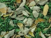 fallen leaves - photo/picture definition - fallen leaves word and phrase image