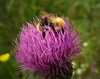 bees - photo/picture definition - bees word and phrase image