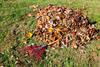 raking leaves - photo/picture definition - raking leaves word and phrase image