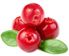 cranberry - photo/picture definition - cranberry word and phrase image