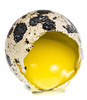 quail egg yolk - photo/picture definition - quail egg yolk word and phrase image