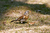 fieldfare bird - photo/picture definition - fieldfare bird word and phrase image