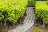 stone path - photo/picture definition - stone path word and phrase image