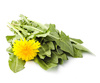 dandelions - photo/picture definition - dandelions word and phrase image