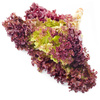 red lettuce - photo/picture definition - red lettuce word and phrase image