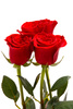 red roses - photo/picture definition - red roses word and phrase image