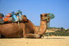 camel - photo/picture definition - camel word and phrase image