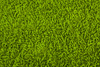 green carpet - photo/picture definition - green carpet word and phrase image