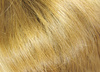 gingery hair - photo/picture definition - gingery hair word and phrase image