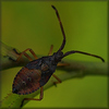 bug - photo/picture definition - bug word and phrase image