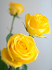 yellow roses - photo/picture definition - yellow roses word and phrase image