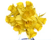 bunch of daffodils - photo/picture definition - bunch of daffodils word and phrase image