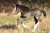 filly foal - photo/picture definition - filly foal word and phrase image
