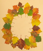 autumn herbarium - photo/picture definition - autumn herbarium word and phrase image