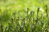 spring grass - photo/picture definition - spring grass word and phrase image