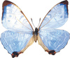 tropical butterfly - photo/picture definition - tropical butterfly word and phrase image