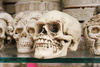 skulls - photo/picture definition - skulls word and phrase image
