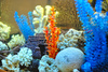 aquarium decoration - photo/picture definition - aquarium decoration word and phrase image