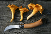 kantarell mushrooms - photo/picture definition - kantarell mushrooms word and phrase image