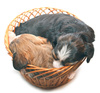 puppies - photo/picture definition - puppies word and phrase image