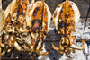 grilled calamari - photo/picture definition - grilled calamari word and phrase image