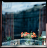 window flowers - photo/picture definition - window flowers word and phrase image