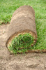 sod roll - photo/picture definition - sod roll word and phrase image