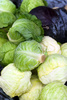 fresh cabbage heads - photo/picture definition - fresh cabbage heads word and phrase image