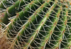 cactus needles - photo/picture definition - cactus needles word and phrase image