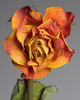 dried rose - photo/picture definition - dried rose word and phrase image