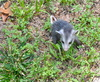 baby opossum - photo/picture definition - baby opossum word and phrase image