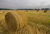 golden hay - photo/picture definition - golden hay word and phrase image