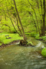 mountain stream - photo/picture definition - mountain stream word and phrase image