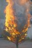 burning tree - photo/picture definition - burning tree word and phrase image
